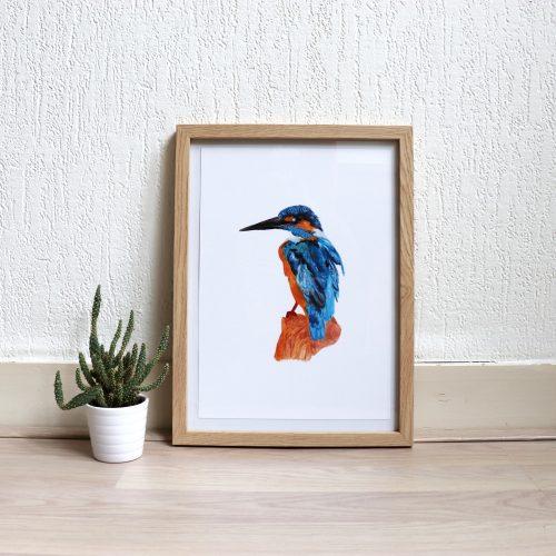 Poster met illustratie ijsvogel gemaakt door Friedolien